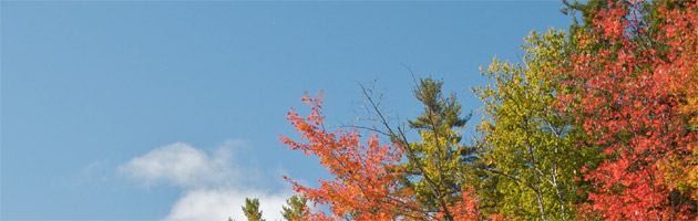 Fall Again Header